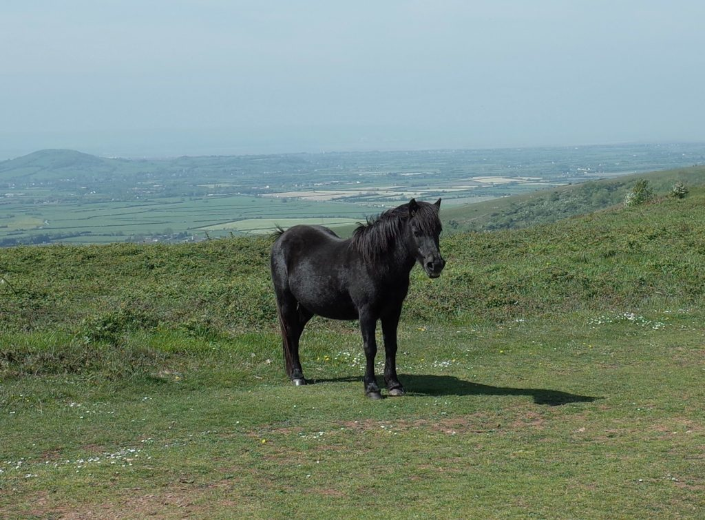 Horse on Wavering Down
