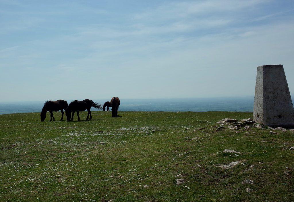 Horses Grazing Wavering Down
