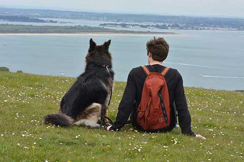 Studland, Dorset area.  Dog with Bristol dog walker