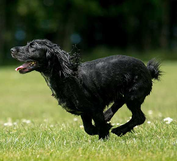 Dog walking locations in Bristol