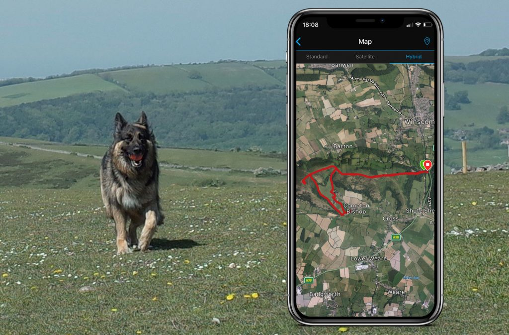 Bristol dog walking GPS tracking and services