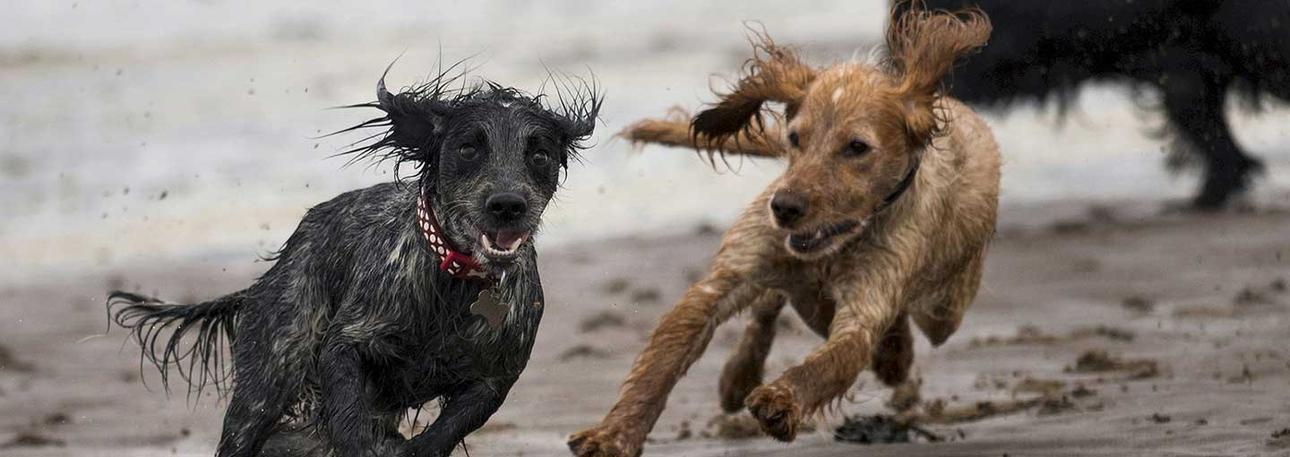 Weekend adventure for dogs