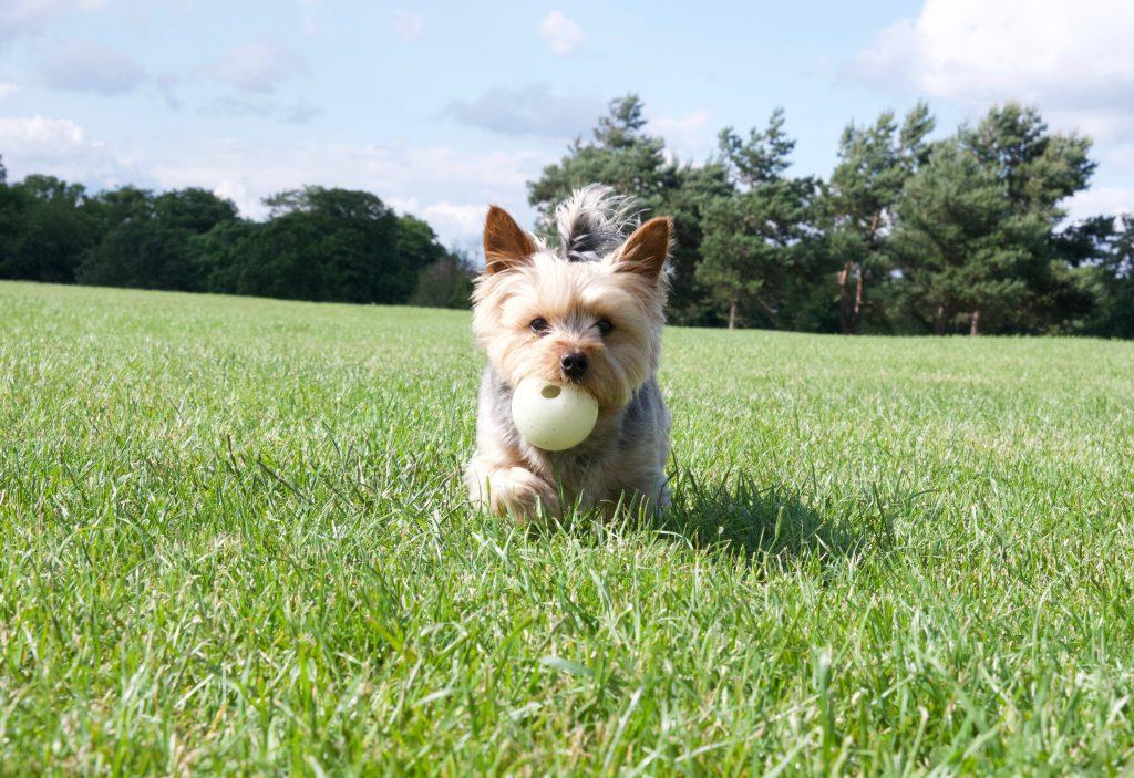Durdham Down Bristol dog playing ball
