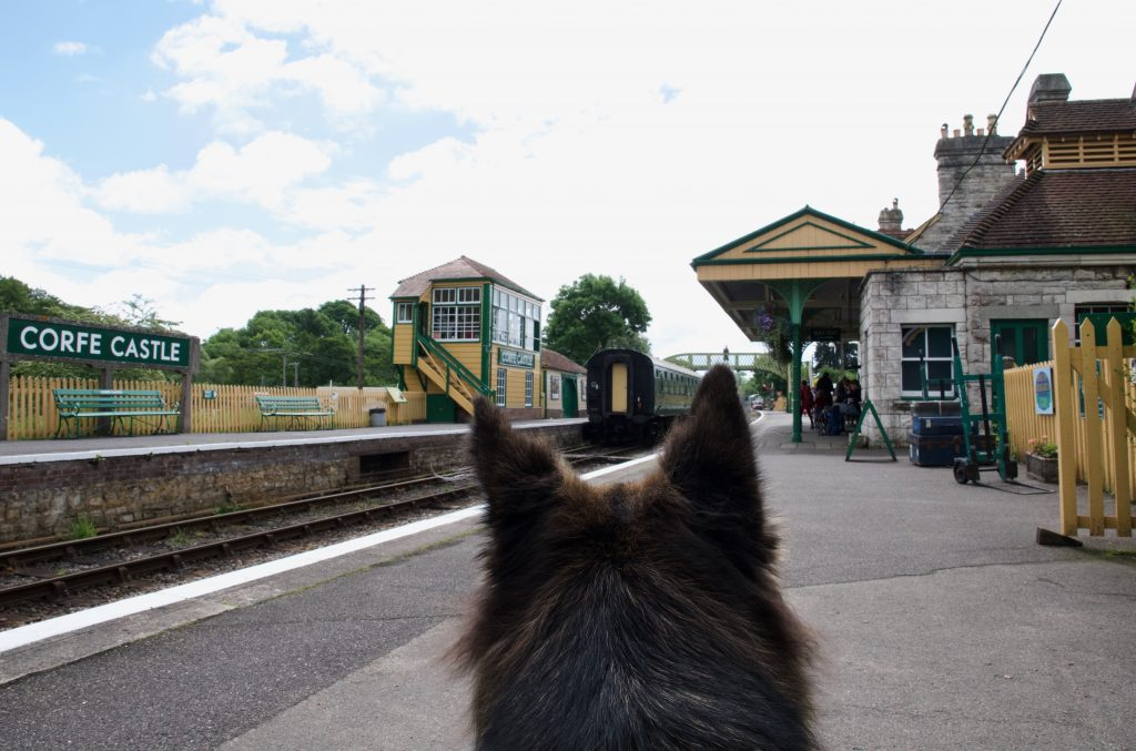 Dog on Corfe Castle train platform
