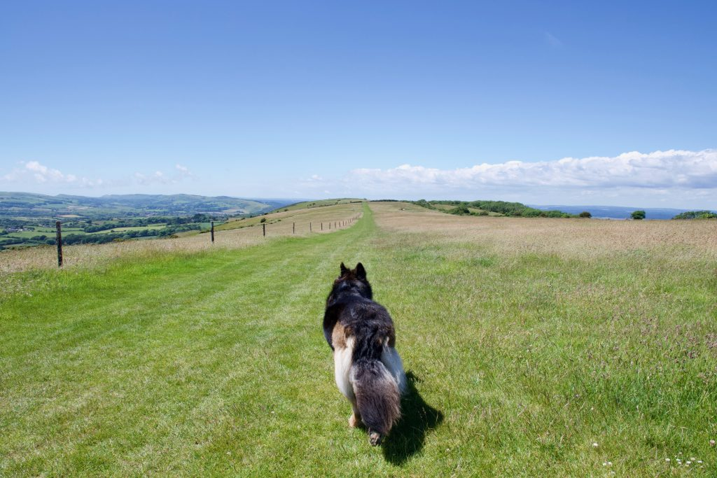 Ulwell ridge walk with dog