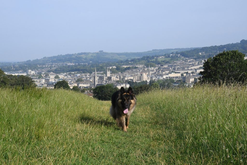 Dog on Bath Skyline walk