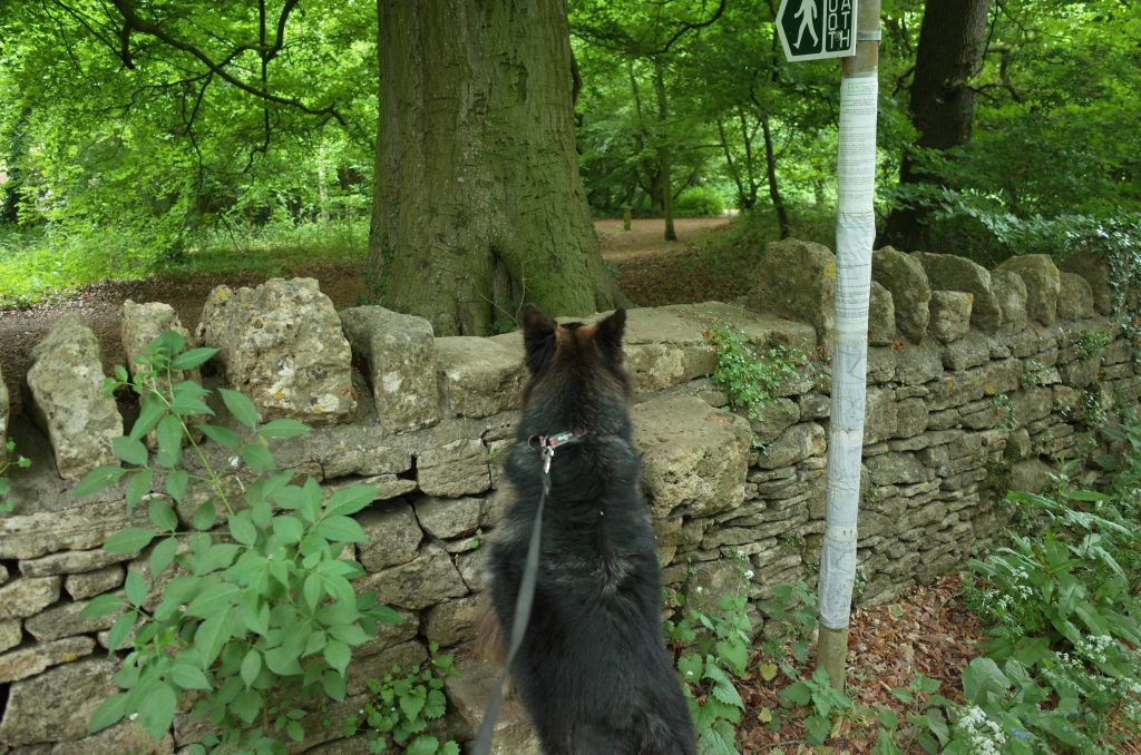Dog climbing stone stile Bushey Norwood Bath Skyline Walk
