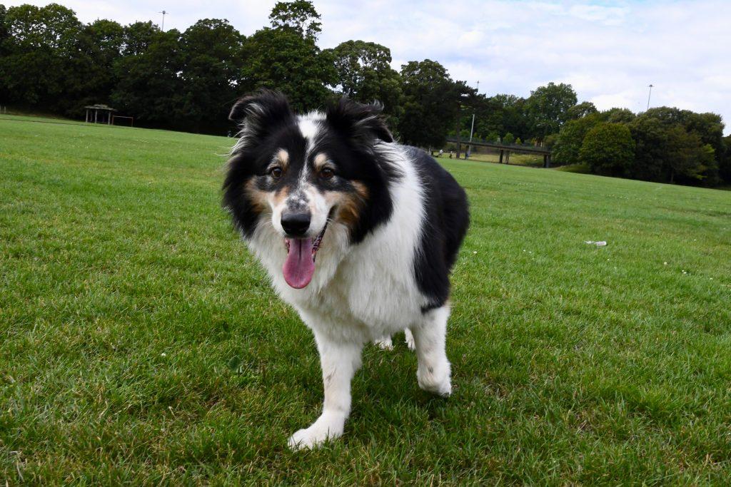 Dog in Greville Smyth Park Bristol