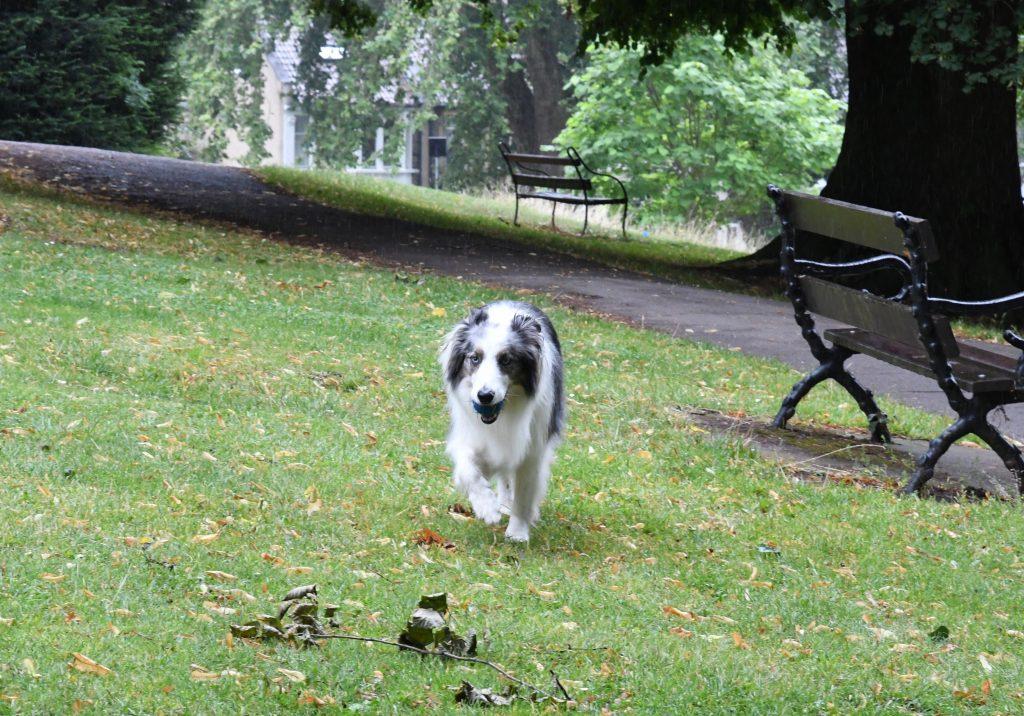 Dog in Greville Smyth Park in Bristol.