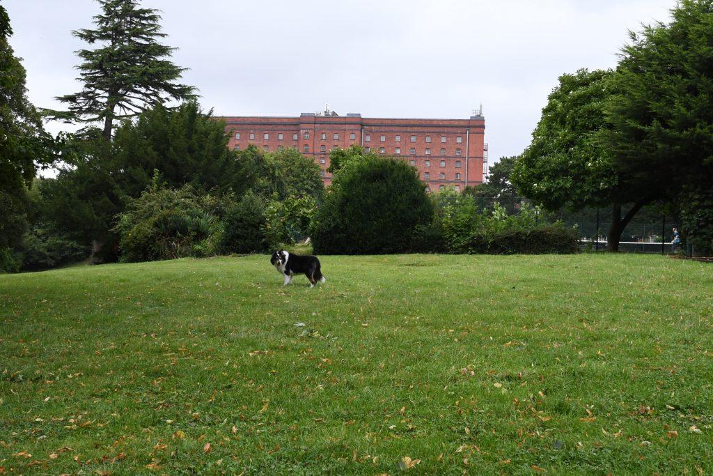 Greville Smyth Park tennis courts.