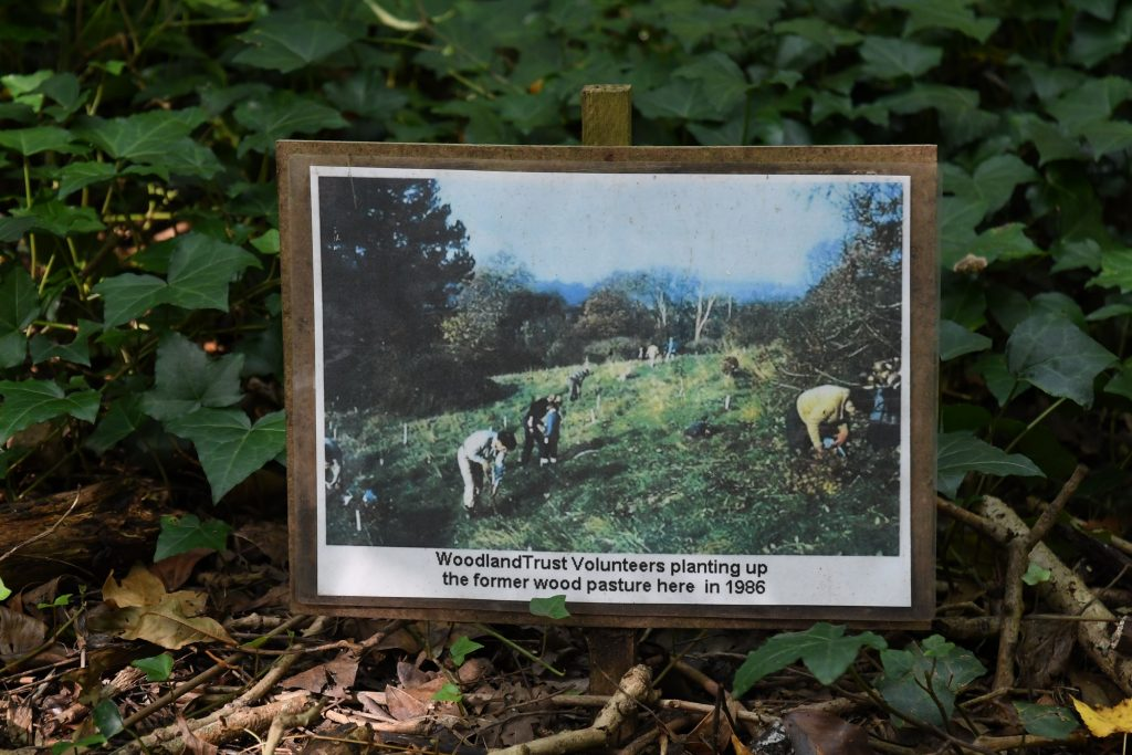 Woodland Trust photo of volunteers planting up the former wood pasture at Bishops Knoll 1986