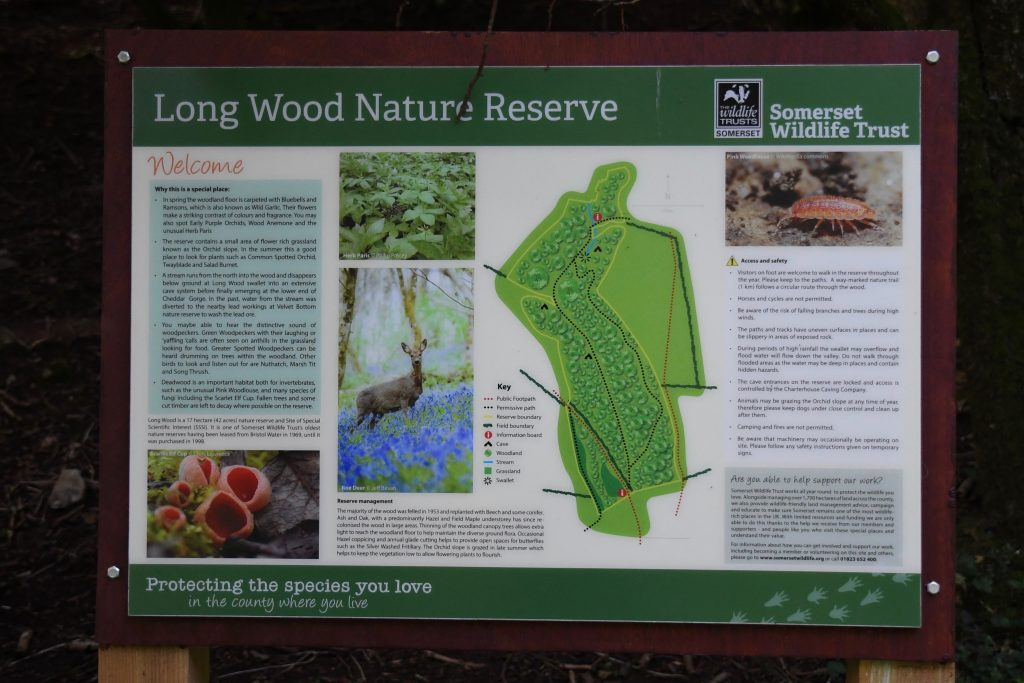 Long Wood Nature Reserve somerset