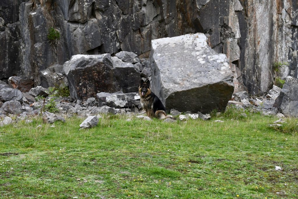 Dog under Black Rock.
