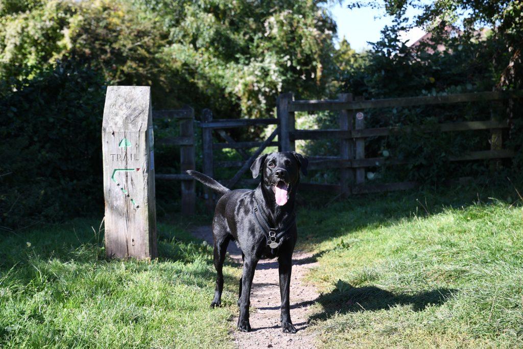 Dog walking trail through Bristol woodland
