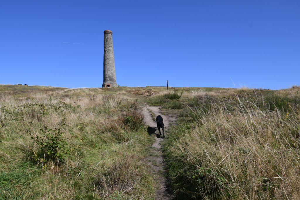 Dog running up to the Chimney on top of the hill in Bristol
