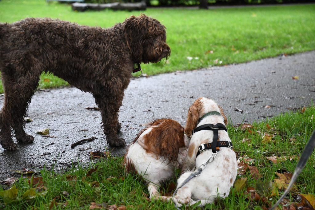 Dogs at Bristol park