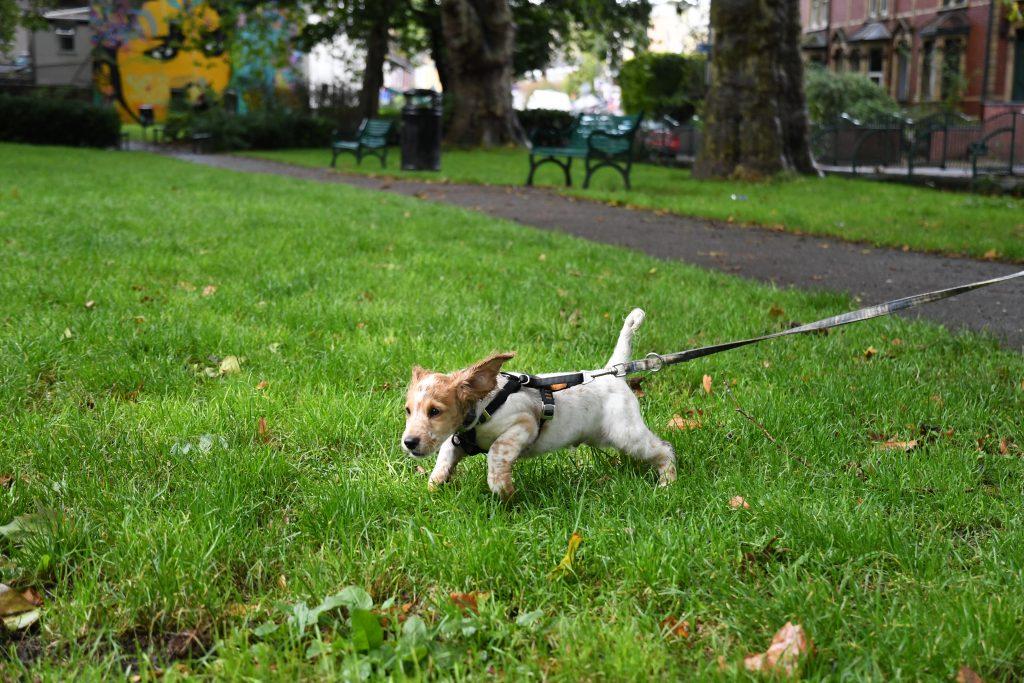 Cockapoo puppy at Mina Road Park Bristol