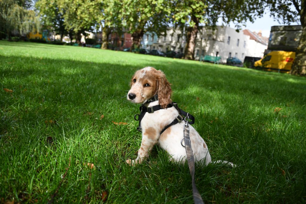Bristol puppy walks