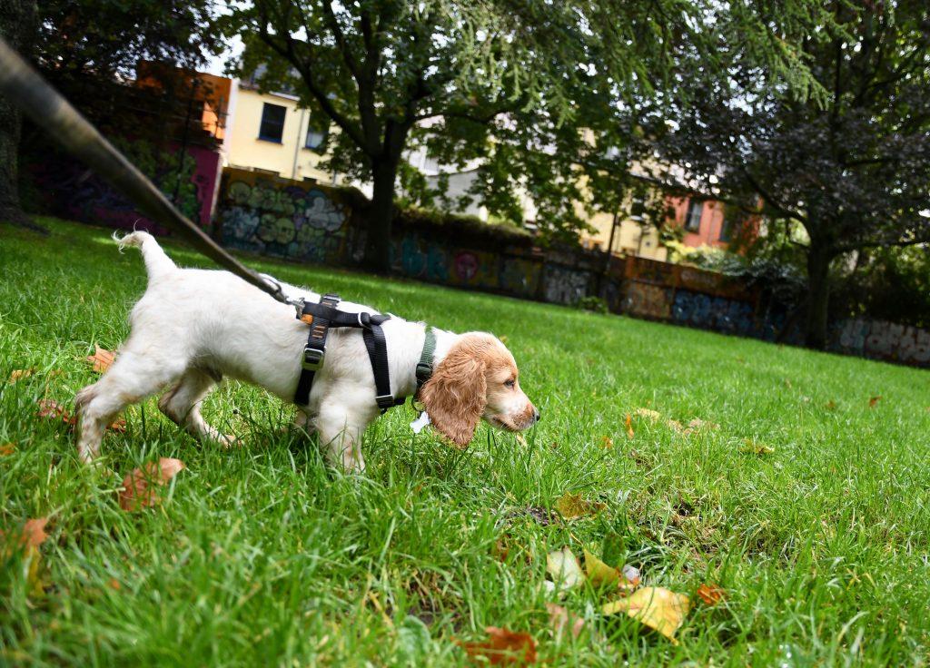 Puppy adventures in Bristol